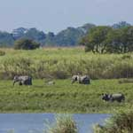 Kaziranga National Park (1985)