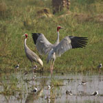 Keoladeo National Park (1985)
